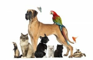 Did You Remember to Account for your Pets in Your Estate Plan? by Tom Sciacca